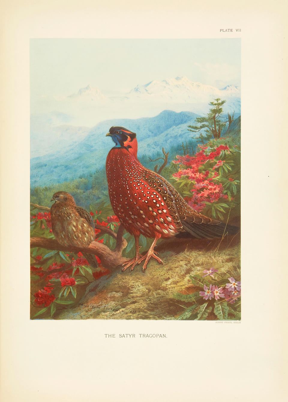 BEEBE, CHARLES WILLIAMS. 1877-1962. A Monograph of the Pheasants.  London: Witherby & Co. (under the auspices of the New York Zoological Society), 1918-22.