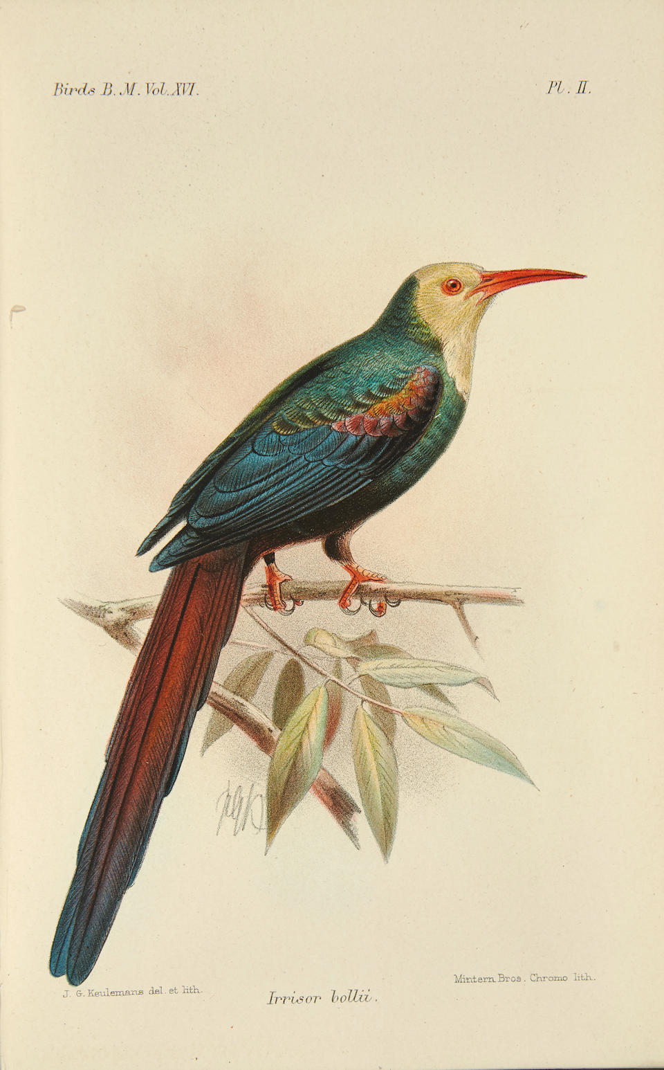 BRITISH MUSEUM ORNITHOLOGY COLLECTION. Six works on ornithology published by the British Museum: 1. SHARPE, RICHARD BOWDLER. 1847-1909. ET. AL. Catalogue of Birds in the British Museum.