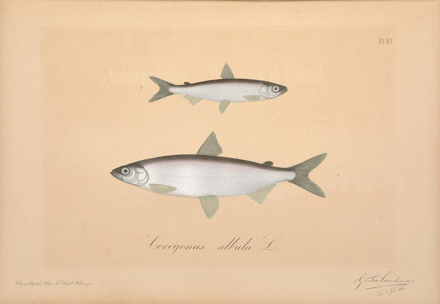 REUTER, ODO MORANNAL. Finlands Fiskar. The Fishes of Finland. Helsingfors: G.W. Edlund,  1883-[92].
