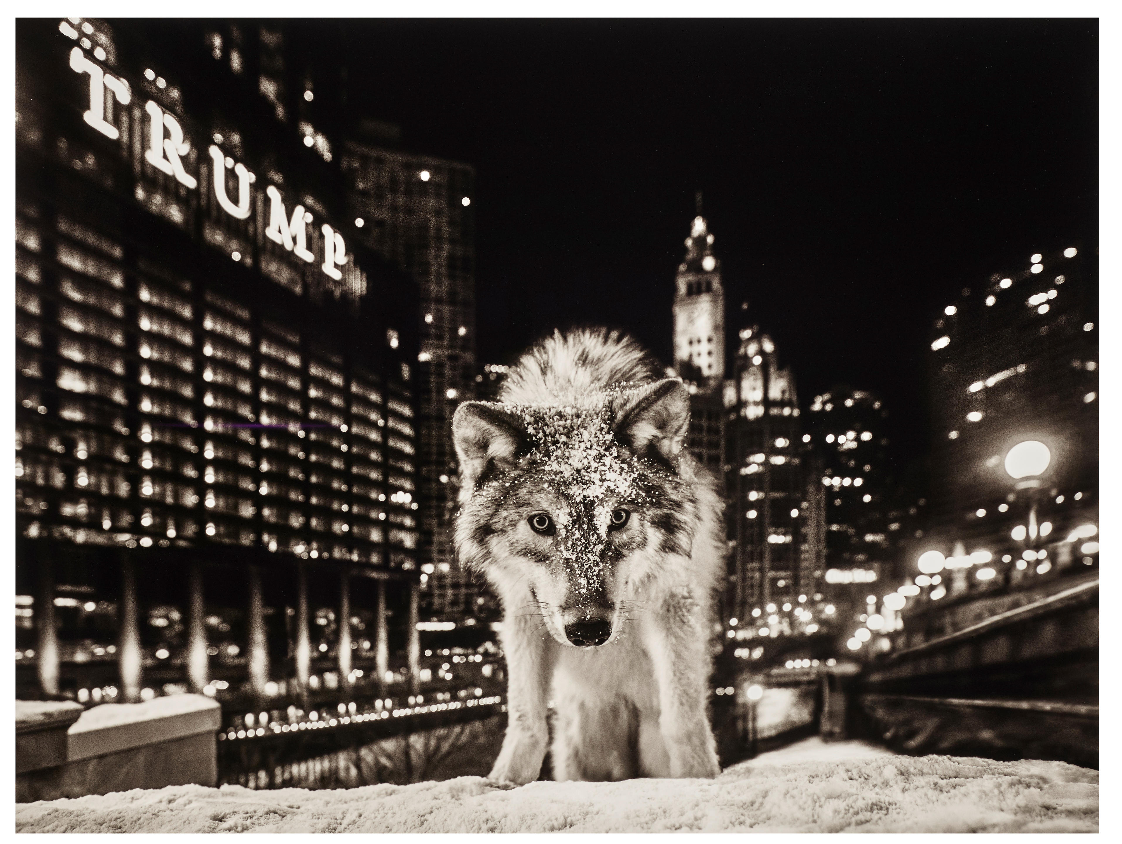 David Yarrow (born 1966); It Is Only A Matter of Time 2;