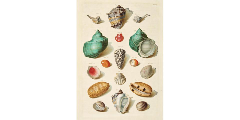 REGENFUSS, FRANZ MICHAEL. 1712-1780.  Auserlesne Schnecken, Muscheln und andere Schaalthiere... Choix de Coquillages et de Crustaces. Copenhagen: 1758.