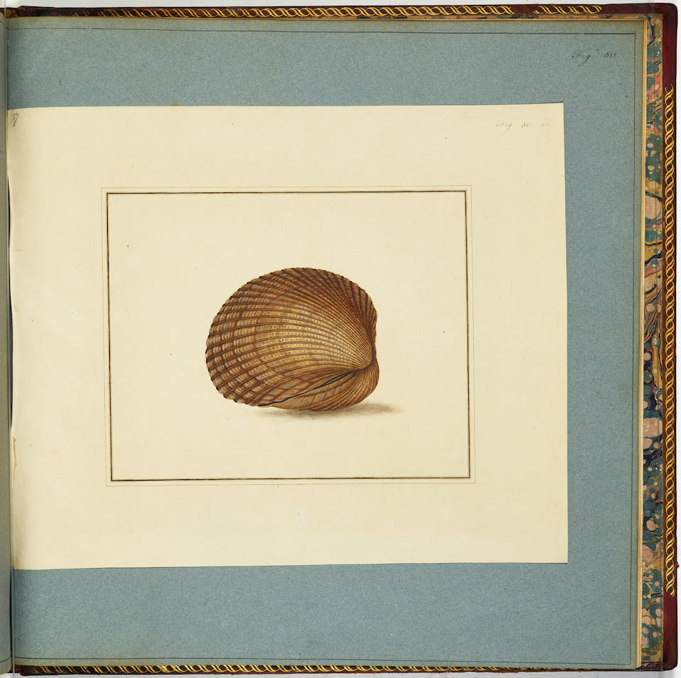 MARTYN, THOMAS. 1760-1816. The Universal Conchologist exhibiting the figure of every known Shell, accurately drawn and painted after Nature with A New Systematic Arrangement.  London: Thomas Martyn, 1784.