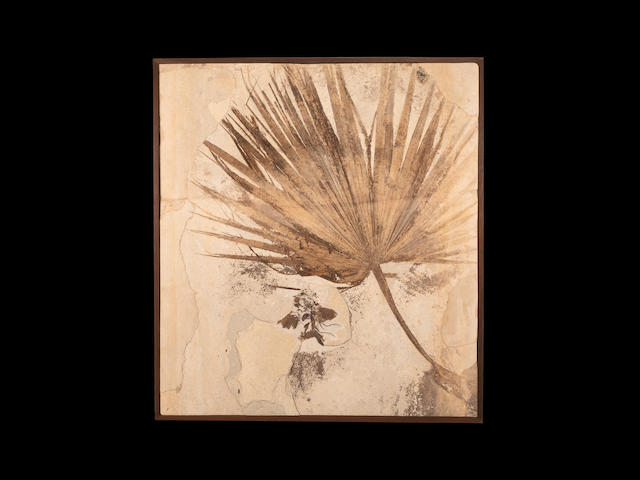Palm Frond with Bird - An Incomparable Presentation