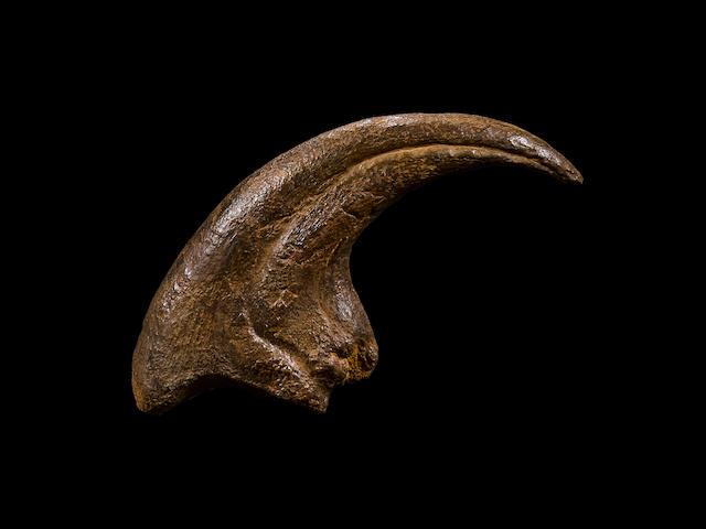 Magnificent Allosaurus Claw