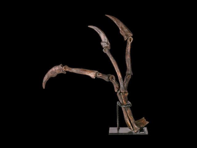 Mounted Struthiomimus Dinosaur Hand