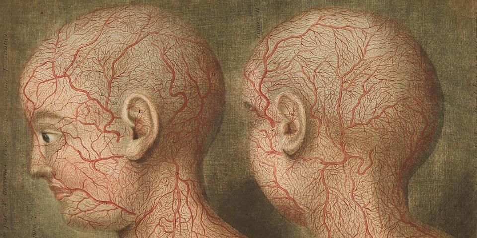 GAUTIER D'AGOTY, JACQUES FABIEN AND J.F.M. DUVERNEY.  Anatomie de le tete, en tableaux imprimes qui representent au naturel le Cerveau sous differentes coupes, la distribution des Vaisseaux dans toutes les parties de la tete, les organes des sens, et une partie de la nevrologie. Paris: Gautier, Duverney, Quillau, 1748.