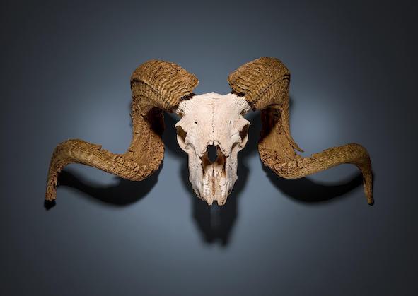 News: Georgia O'Keeffe Ram's Skull at Bonhams Books Sale