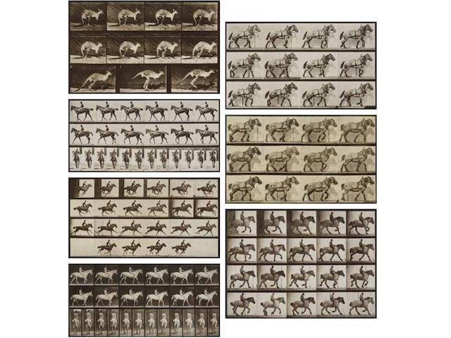 "Eadweard Muybridge (1830-1904); Selected images from ""Animal Locomotion"";"